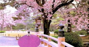 NHK:樱花樱烂漫 Cherry Blossoms Romance Spring In Japan 超清1080P 百度网盘下载