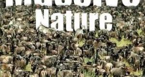 [英语中英字幕]动物世界纪录片:bbc-群体大自然 Massive Nature 全6集