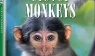 [英语中英字幕]动物世界纪录片:BBC-聪明的猴子 全1集 下载