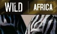 [英语中英字幕]动物世界纪录片:BBC野性非洲 Wild Africa 全6集下载