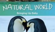 [英语中英字幕]动物世界纪录片:BBC 自然世界 动物母性 Bringing Up Baby 全1集