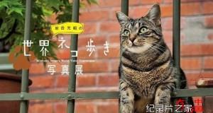 [日语中日字幕]动物世界纪录片:NHK-《岩合光昭的猫步走世界》30集 高清下载