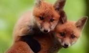 [英语中英字幕]动物世界纪录片:bbc-超萌动物 Super Cute Animals (2015)全1集 高清720P下载