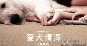[英语中幕]超感人狗狗纪录片:爱犬情深 Dogs 第一季 全6集 高清下载
