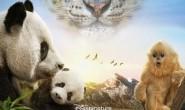[国英双语]动物世界纪录片:2016.我们诞生在中国 Born.in.China 全1集 带中文字幕 高清720P下载