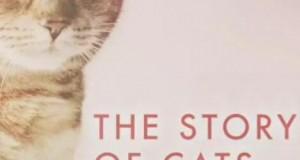 [英语中字]动物世界纪录片:bbc-猫科动物的故事 The Story of Cats (2016)全3集 高清720P下载