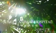 [英语中英字幕] BBC自然世界:丛林动物医院Jungle Animal Hospital 2016 全1集 高清720P下载