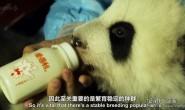 [英语中英字幕] 动物世界纪录片:BBC-熊猫缔造者.Panda.Maker 全1集下载