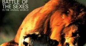 [英语中字]动物世界纪录片:BBC-雌雄争霸战 全6集