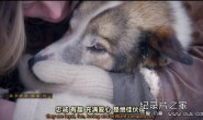 [英语中英字幕]狗狗秘闻(汪星人的秘密生活)Secret Life of Dogs 第一集