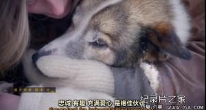 [英语中英字幕]狗狗秘闻(汪星人的秘密生活)Secret Life of Dogs 第一集