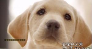 [英语中英字幕]bbc:狗狗秘闻(汪星人的秘密生活)Secret Life of Dogs 第二集