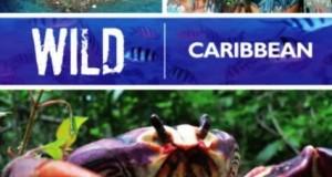 [英语中英字幕]人文地理纪录片:BBC野性加勒比 Wild Caribbean 全4集
