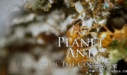 【英语中字】动物世界纪录处:BBC-蚂蚁国度 Planet Ant 全1集高清