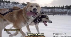 [英语中英字幕]bbc:狗狗秘闻(汪星人的秘密生活)Secret Life of Dogs 第三集 高清