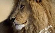 [英语中字]动物世界纪录片:行星地球特别版-沙漠狮Planet Earth Bonus Desert Lions 全1集