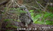 [英语中字]动物世界纪录片:BBC自然界的恶魔 Nightmares Of Nature 第一季全10集