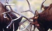 [国语中字]动物世界纪录片:bbc-为生存而杀戮 Killing For A Living 全13集
