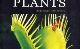[英语中文字幕]植物王国纪录片:bbc植物私生活 The Private Life of Plants全6集