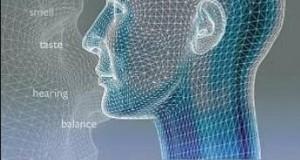 [英语中字]科学探秘纪录片:bbc人类感官 Human Senses (2003) 全3集