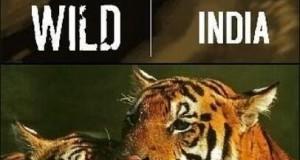 [英语中字]人文地理纪录片:bbc野性印度(虎的王国) Wild India (1997)全6集
