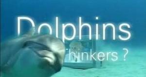 [英语中字]动物世界纪片:BBC聪明的海豚(海豚智力之谜) Dolphins-Deep Thinkers 全1集