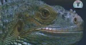 [国英双语]动物世界纪录片:BBC 潜龙活现(现代恐龙)Dragons Alive(2004) 全3集下载