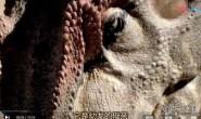 [英语中字]动物世界纪录片:BBC与恐龙同行特辑-异特龙(大艾尔)之谜 全1集