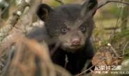 [英语中字]动物世界纪录片:莉莉-一头熊的生活-Natural World: Lily – A Bear's Life 全1集 超清1080P