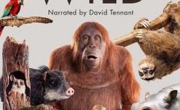[英语中英字幕]BBC动物世界纪录片:荒野间谍 第一季 Spy in the Wild 全5集