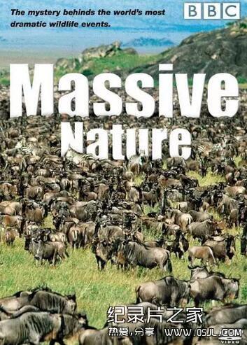 [英语中英字幕]动物世界纪录片:bbc-群体大自然 Massive Nature 全6集图片 No.1
