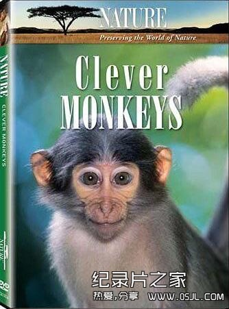 [英语中英字幕]动物世界纪录片:BBC-聪明的猴子 全1集 下载图片 No.1
