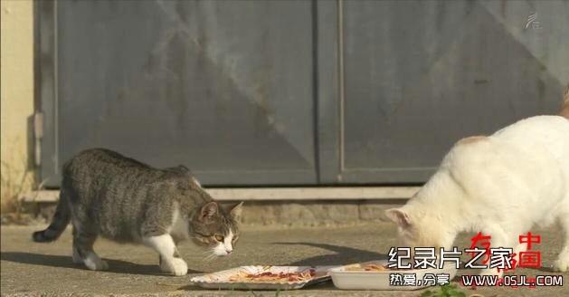 [日语中日字幕]动物世界纪录片:NHK-《岩合光昭的猫步走世界》30集 高清下载图片 No.6