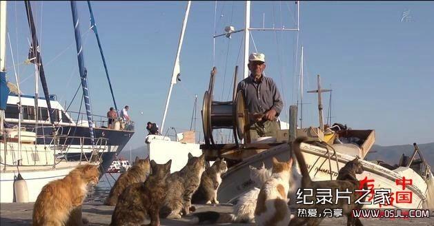[日语中日字幕]动物世界纪录片:NHK-《岩合光昭的猫步走世界》30集 高清下载图片 No.4