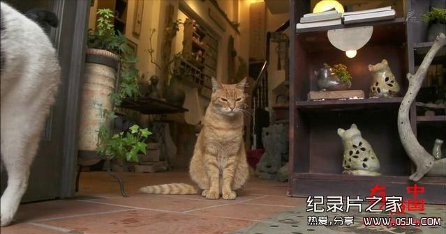 [日语中日字幕]动物世界纪录片:NHK-《岩合光昭的猫步走世界》30集 高清下载图片 No.3
