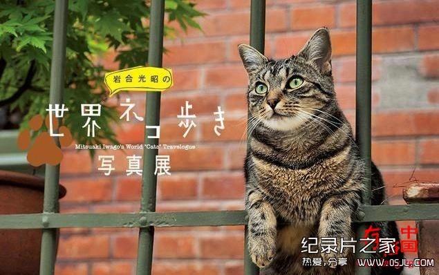 [日语中日字幕]动物世界纪录片:NHK-《岩合光昭的猫步走世界》30集 高清下载图片 No.1