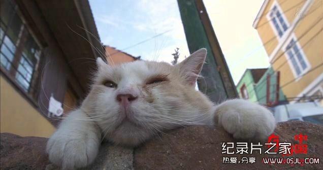 [日语中日字幕]动物世界纪录片:NHK-《岩合光昭的猫步走世界》30集 高清下载图片 No.2