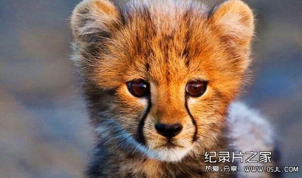 [英语中英字幕]bbc动物世界纪录片:动物宝宝 Animal Babies 第一季全3集 高清720P下载图片 No.1