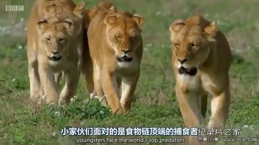 [英语中英字幕]bbc动物世界纪录片:动物宝宝 Animal Babies 第一季全3集 高清720P下载图片 No.2