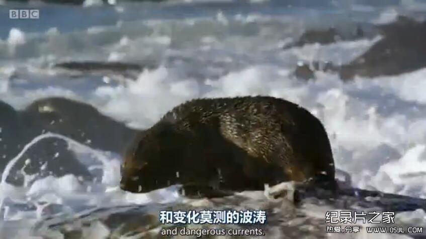[英语中英字幕]bbc动物世界纪录片:动物宝宝 Animal Babies 第一季全3集 高清720P下载图片 No.3