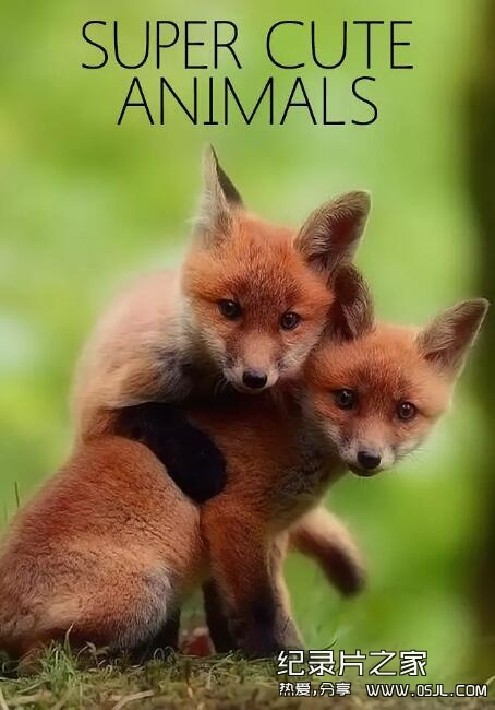 [英语中英字幕]动物世界纪录片:bbc-超萌动物 Super Cute Animals (2015)全1集 高清720P下载图片 No.1