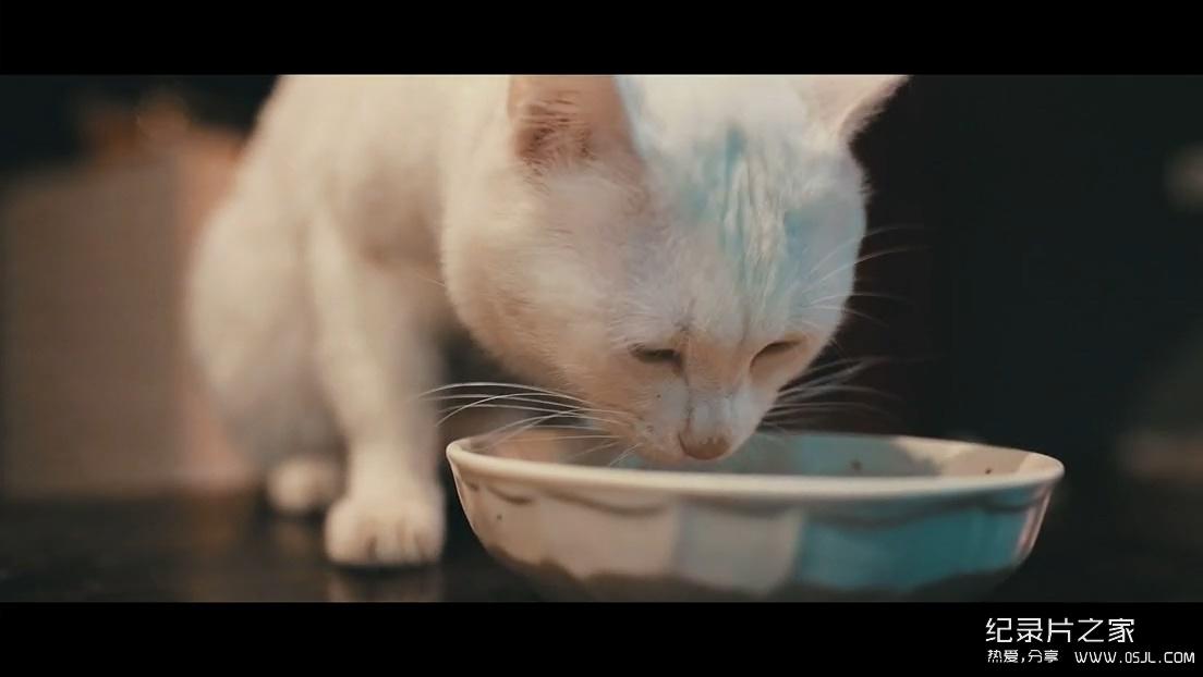 国产美食纪录短片:《日食记》第一季 全10集+番外7集 720P下载图片 No.4