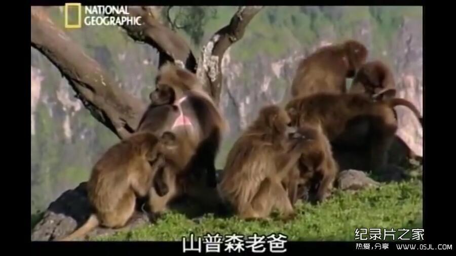[英语中字]动物世界纪录片:国家地理-爱上狮尾狒 Cliffhangers 全3集 下载图片 No.2