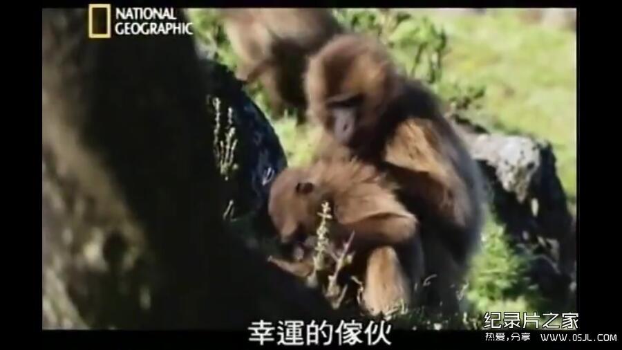 [英语中字]动物世界纪录片:国家地理-爱上狮尾狒 Cliffhangers 全3集 下载图片 No.4