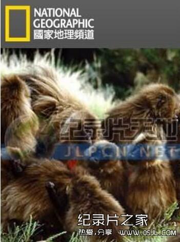 [英语中字]动物世界纪录片:国家地理-爱上狮尾狒 Cliffhangers 全3集 下载图片 No.1