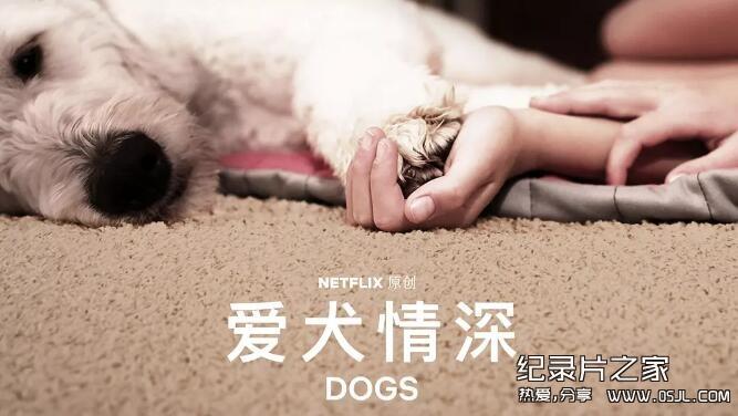 [英语中幕]超感人狗狗纪录片:爱犬情深 Dogs 第一季 全6集 高清下载图片 No.1