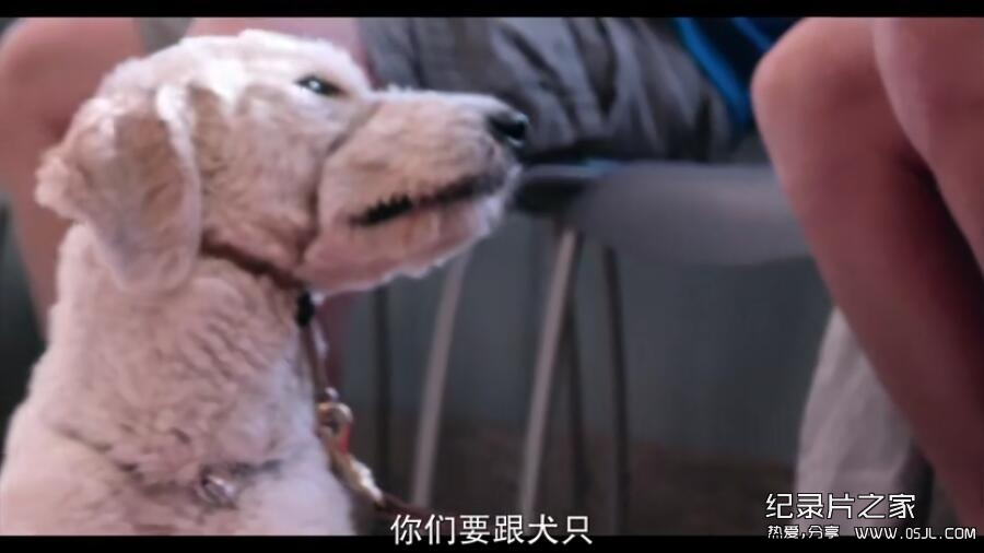 [英语中幕]超感人狗狗纪录片:爱犬情深 Dogs 第一季 全6集 高清下载图片 No.3