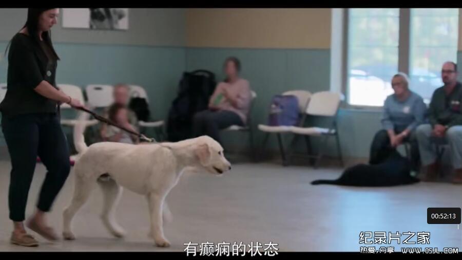 [英语中幕]超感人狗狗纪录片:爱犬情深 Dogs 第一季 全6集 高清下载图片 No.4