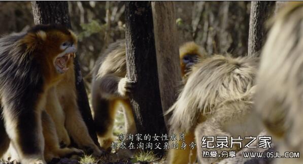 [国英双语]动物世界纪录片:2016.我们诞生在中国 Born.in.China 全1集 带中文字幕 高清720P下载图片 No.3