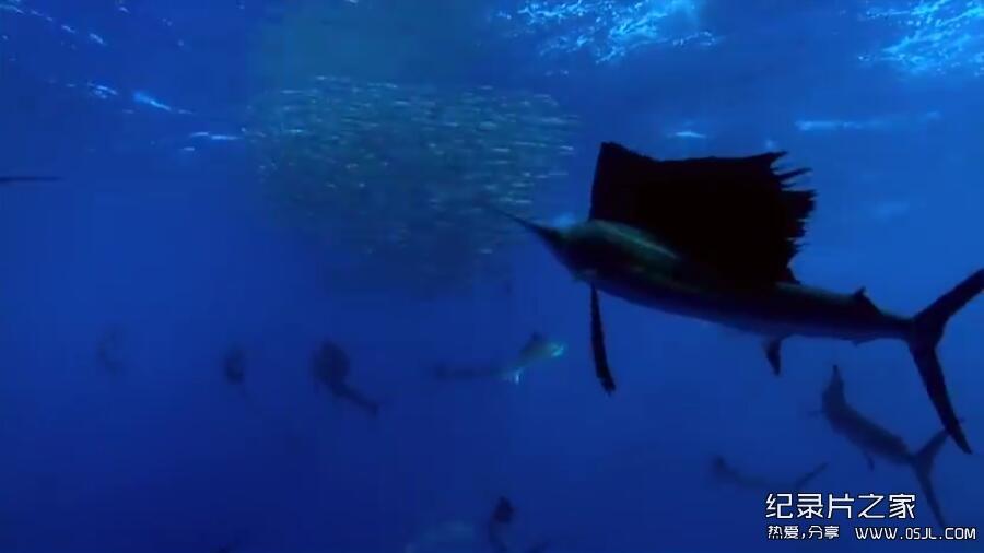 [英语无字幕]法国记录片:海洋星球 Planet Ocean (2012) 全1集 高清下载图片 No.3